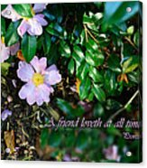A Friend's Love Acrylic Print