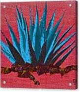 Agave Acrylic Print by Greg Wells