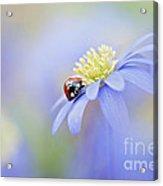 Anemone Lady Acrylic Print