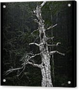 Anthropomorphic Tree Acrylic Print