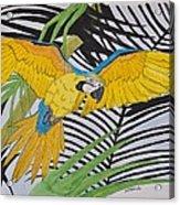Ara Ararauna Acrylic Print