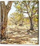 Australian Outback Oasis Acrylic Print