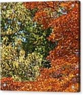 autumn colours in Bavaria Acrylic Print