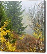 Autumn Fog Dolly Sods Acrylic Print