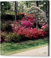 Azaleas And Dogwood Acrylic Print