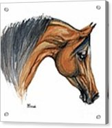 Bay Arabian Horse Watercolor Painting  Acrylic Print