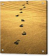 Beach Walker Acrylic Print