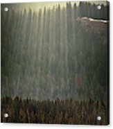 Beams Of Sunlight Shine Over Old Growth Acrylic Print