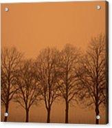 Beautiful Trees In The Fall Acrylic Print