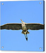 Beauty Of Flight Acrylic Print