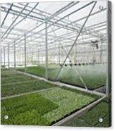 Bedding Plant Production Acrylic Print