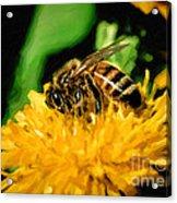 2 Bee Or Not 2 Bee Acrylic Print
