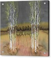 2 Birch Groves Acrylic Print
