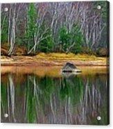 Birch Shoreline Acrylic Print