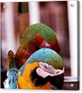 2 Birds Acrylic Print