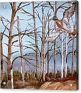 Birds Landing Acrylic Print