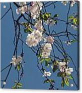 Blooming Trees Acrylic Print