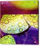 Botanical Elements I Acrylic Print