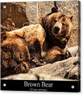 Brown Bear Acrylic Print by Chris Flees