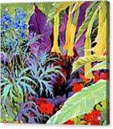 Brugmansia-1 Acrylic Print