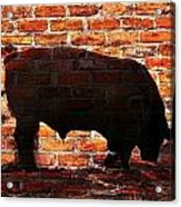 Bull At Sunrise Acrylic Print