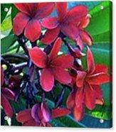 Burgundy Plumeria Acrylic Print