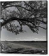 Burr Oak Tree Acrylic Print