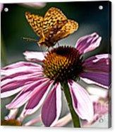 Butterfly Beauty Acrylic Print