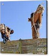 Camels At The Ashgabat Sunday Market In Turkmenistan Acrylic Print