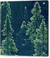 Canada, Ontario Algonquin Provincial Acrylic Print