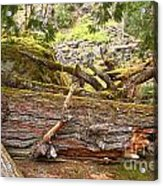 Cheakamus Rainforest Debris Acrylic Print