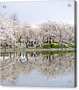 Cherry Blossoms In Tokyo Acrylic Print
