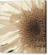Chipmunk's Peredovik Sunflower Acrylic Print