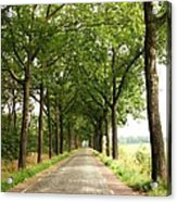 Cobblestone Country Road Acrylic Print by Carol Groenen