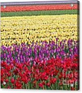 Colors Of Holland Acrylic Print
