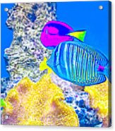 Coral Fishes Acrylic Print