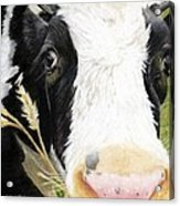 Cow No. 0652 Acrylic Print by Carol McCarty