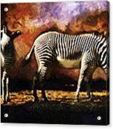 Creation Zebra Acrylic Print