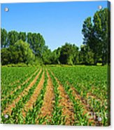 Cultivated Land Acrylic Print