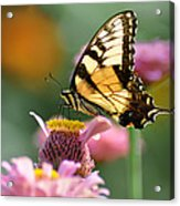 Delicate Wings Acrylic Print by Bill Cannon