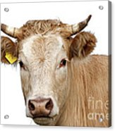 Detail Of Cow Head Acrylic Print