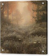 Dew Drenched Furze  Acrylic Print