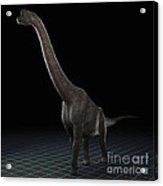 Dinosaur Brachiosaurus Acrylic Print