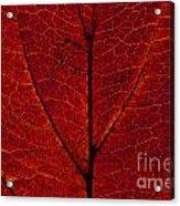 Dogwood Leaf Backlit Acrylic Print