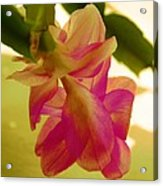 Easter Cactus Acrylic Print