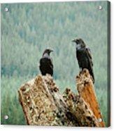 Environment  Nature Acrylic Print