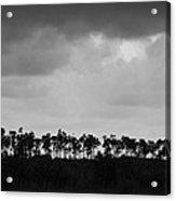 Everglades No.2 Acrylic Print