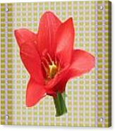Exotic Red Tulip In Bold And Two Border Patterns Tiny Sparkle Parallal Horizontal Strips Summer Flow Acrylic Print