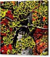 Fall Birch Leaves  Acrylic Print