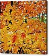 Fall Colors 2014-3 Acrylic Print